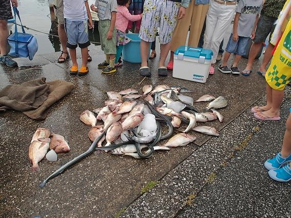 すだてのお魚20160606