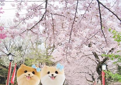 お花見に行ってきました
