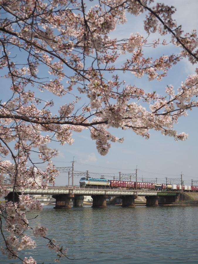 EF66 100番台と桜
