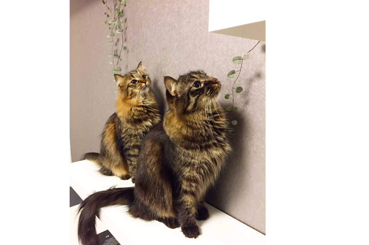 テオとナスカ
