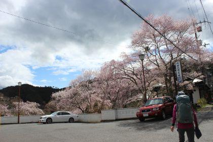 20150402吉野山03