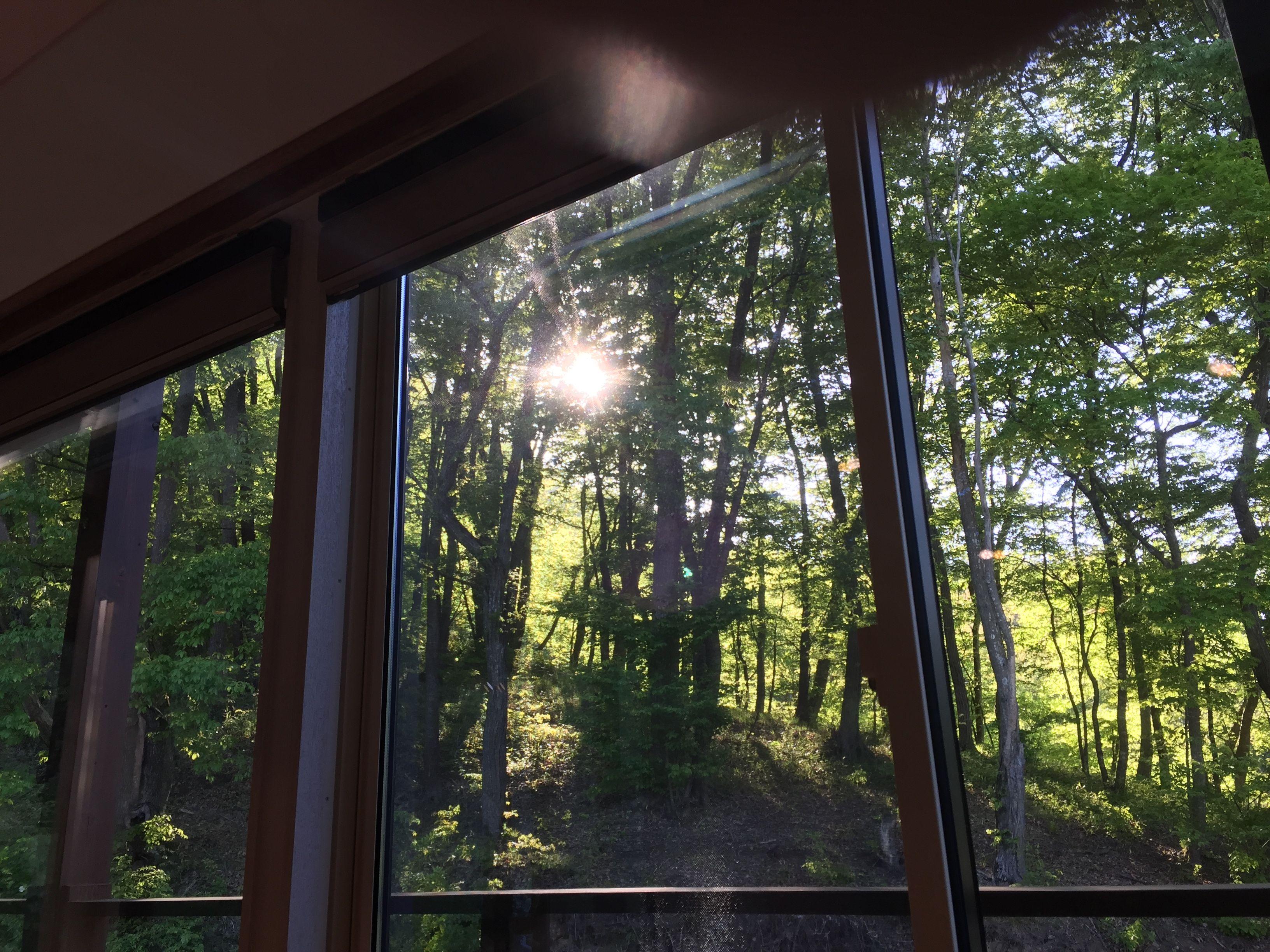 西窓の借景