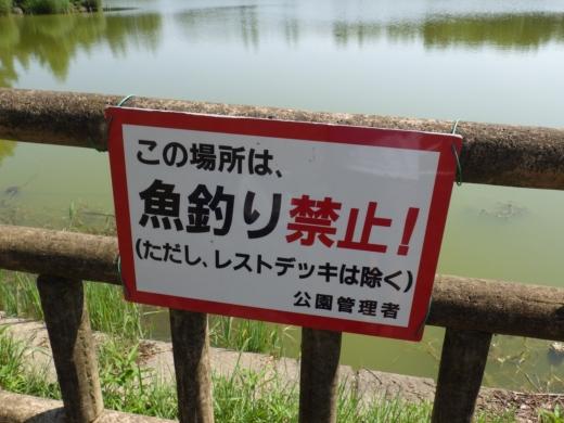 松伏総合公園 (1)