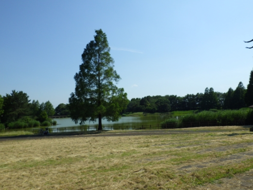 松伏総合公園 (8)