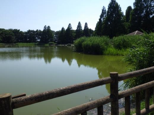 松伏総合公園 (10)