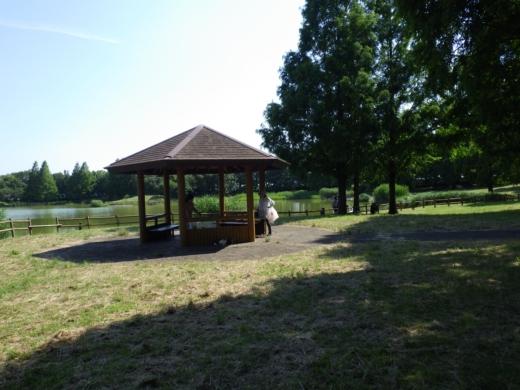 松伏の池 (2)