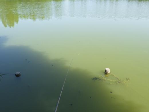 松伏の池 (7)