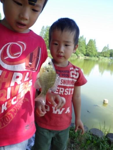 松伏の池 (11)