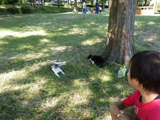 松伏の池 (13)