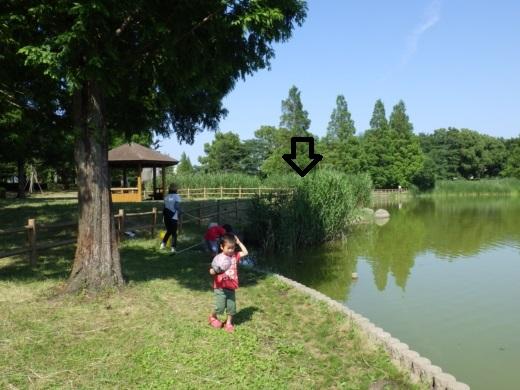 松伏の池 (4)