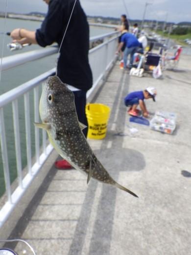 飯岡漁港釣り (23)