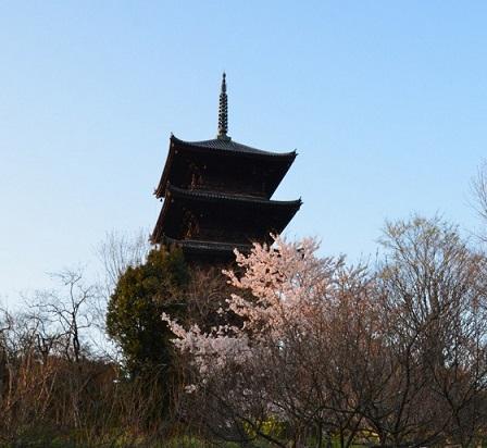 DSC_8774都と桜