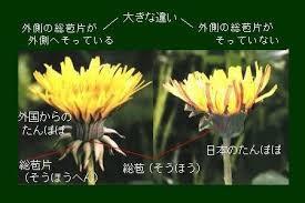 yjimage_20160408123336ed0.jpg