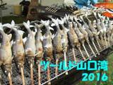 山口湾2016タブ