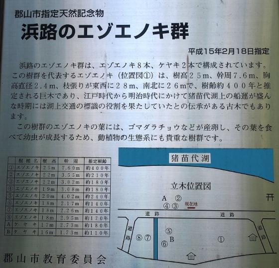 P6039201 (560x538)