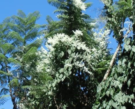 ジャングルの白い花(1)