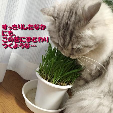 草食男子2