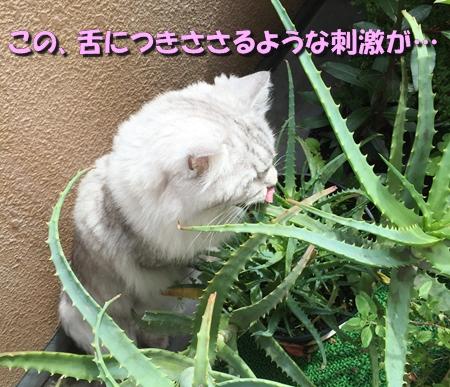 野菜ソムリエ1