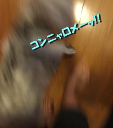 かくれんぼ11