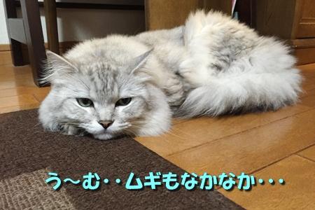 おみやげ11