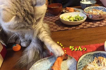 家族の食事を見守るのだ!10