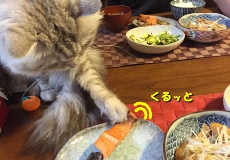 家族の食事を見守るのだ!11