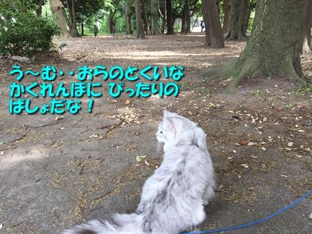 お散歩11