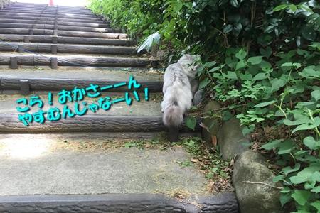 お散歩後編5