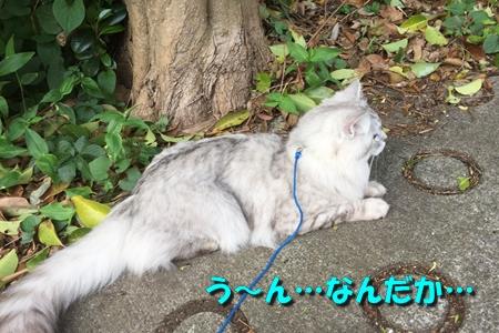 玉三郎の初恋1