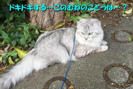 玉三郎の初恋2