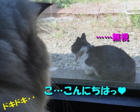 玉三郎の初恋4