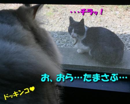 玉三郎の初恋5