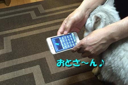 人猫語翻訳機1