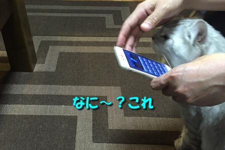 人猫語翻訳機2