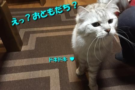 人猫語翻訳機4