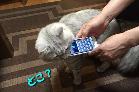 人猫語翻訳機6