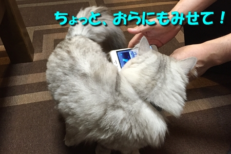 人猫語翻訳機7