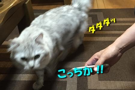 人猫語翻訳機11