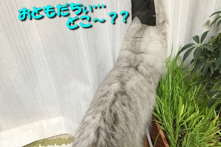 人猫語翻訳機12