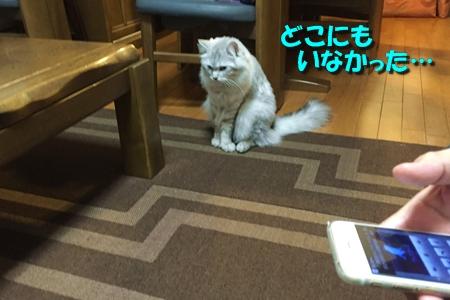 人猫語翻訳機13