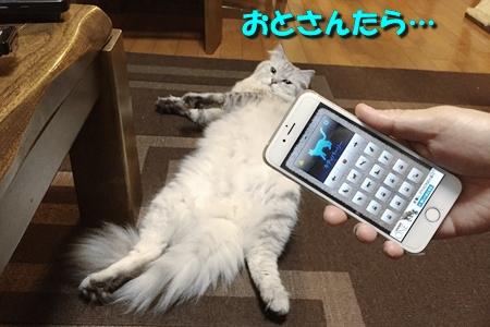 人猫語翻訳機14