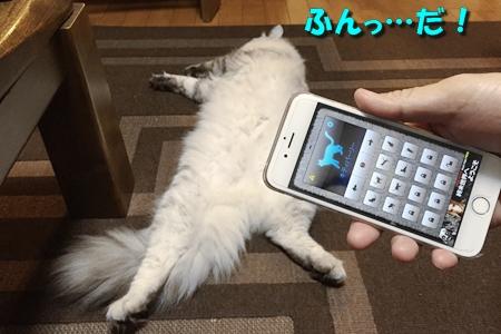 人猫語翻訳機15