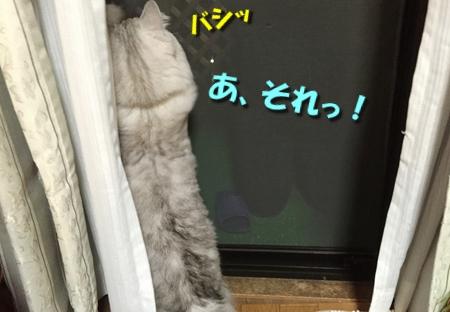 ツルツルブーム続行中6