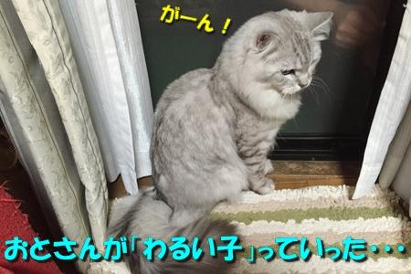 ツルツルブーム続行中9