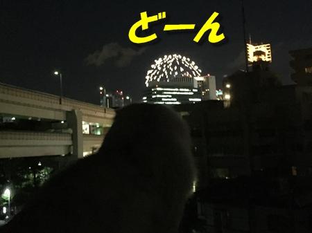 開港記念日6