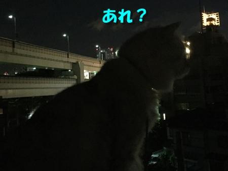 開港記念日8