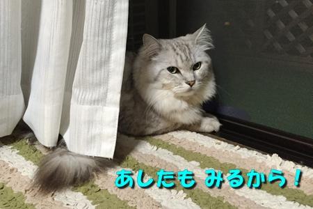 開港記念日10