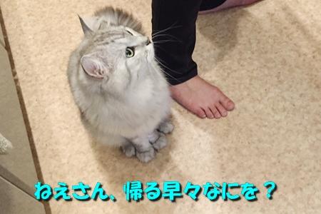 たまさぶのしごと(監視編)4