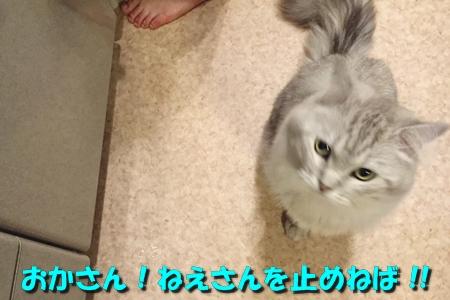 たまさぶのしごと(監視編)7