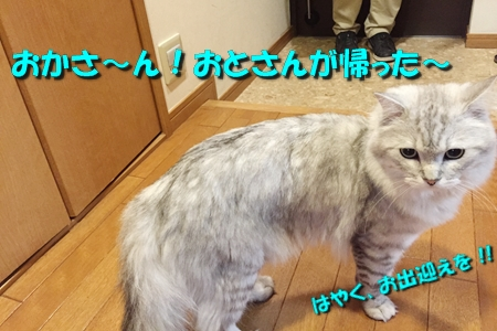 たまさぶのしごと(監視編)10